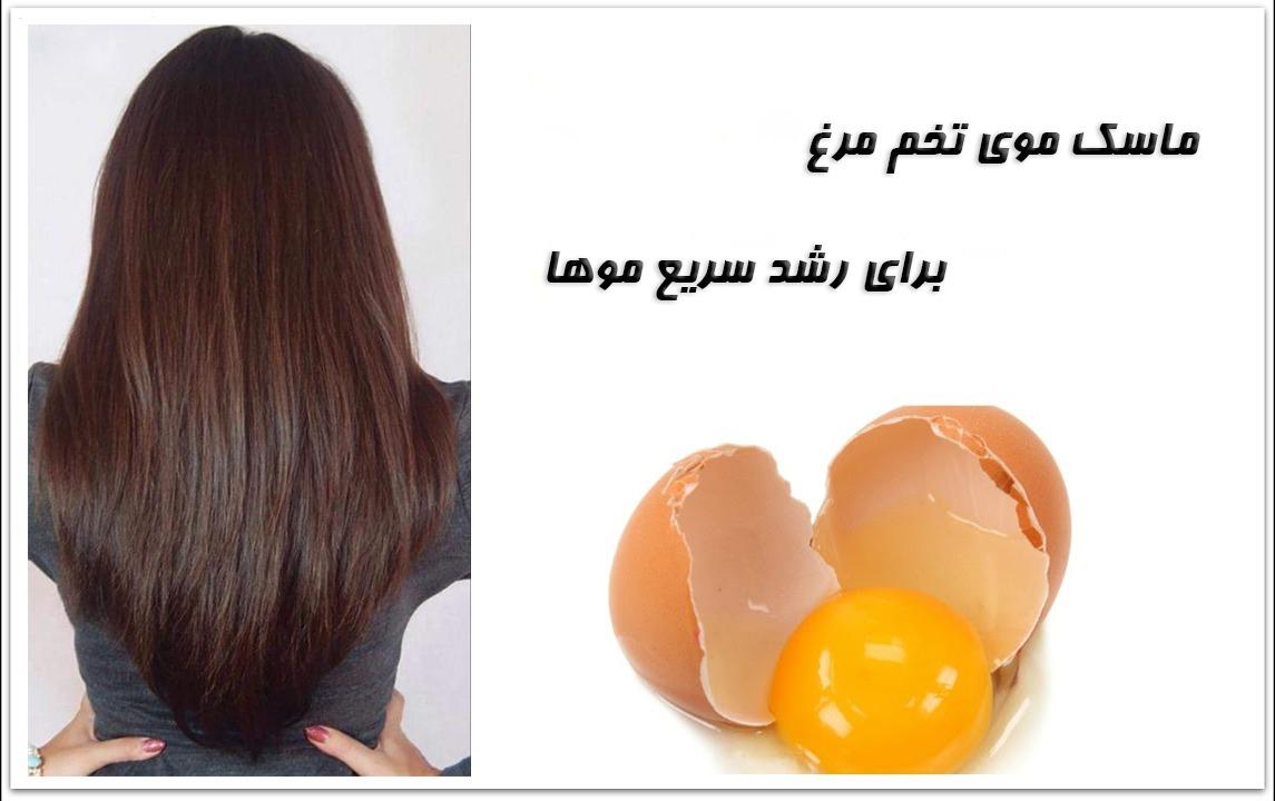 ماسک مو برای رشد سریع مو تهیه شده از تخم مرغ